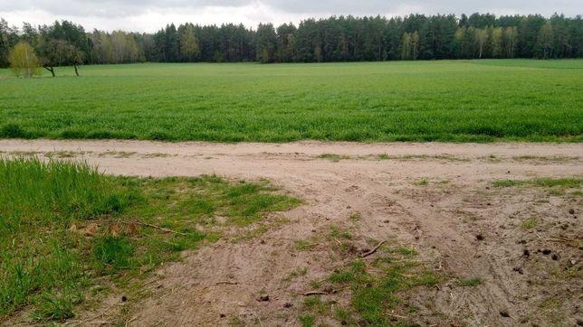 Sprzedam ziemię rolną