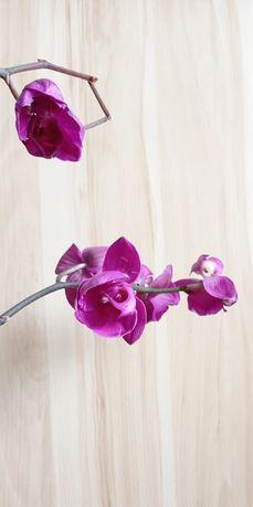 Zamienię storczyk orchidea żywy kwiat na pieluchy rozmiar 5 lub 6