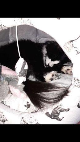 Zaginął nasz Freedie czarno biały ukochany kotek