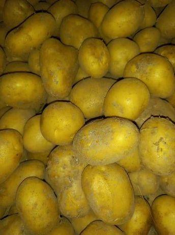 Batatas Novas Brancas e Vermelhas