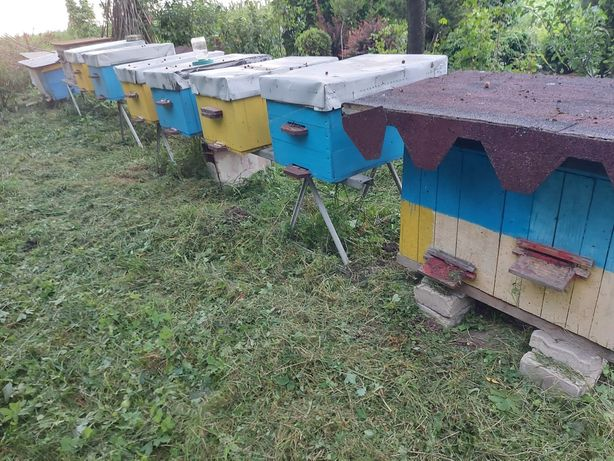 Пасіка, вулики, бджоли