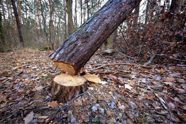 Профессиональный Спил деревьев! Оценка Бесплатная