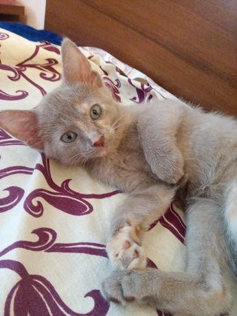 Кошечки сфинкс браш