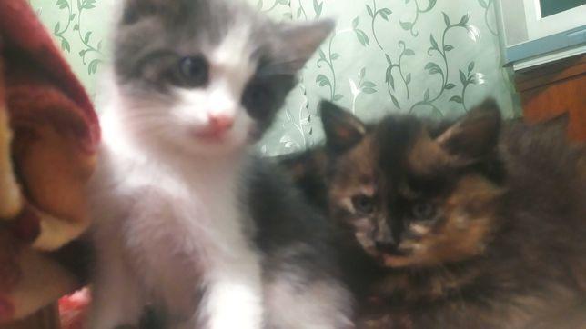 Котики маленькі різних кольорів