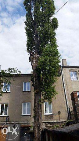 Wycinka drzew alpinistycznie. Wykopy i wyburzenia. Koparki. Podnośnik.