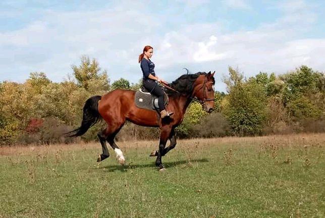 Катание верхом на лошади  Конные прогулки