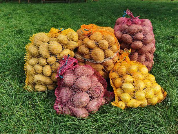Ziemniaki, buraki ,cebula od producenta !!!