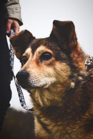 Orkan to prawdziwy skarb - pies idealny! Szuka kochającego domu!!