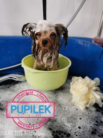 Psi fryzjer tarchomin/białołęka, strzyżenie psów, grooming