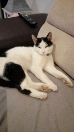 Zaginął kot o imieniu Milki.