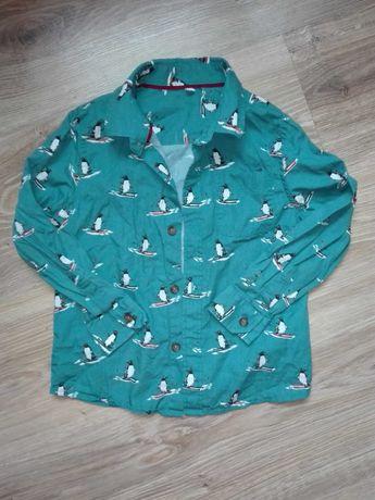 Koszula w pingwiny 98/104