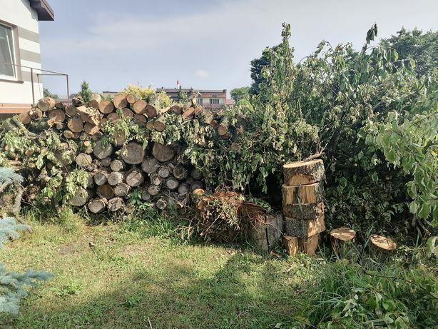 Drewno z wycinki , jabłoń iglaki klocki