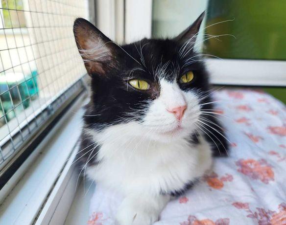 Очень дружелюбная пушинка - кошка Жанетта | черно-белая кошечка 2 года