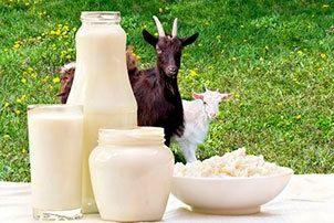 Молоко козье,творог, сыры
