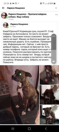 Нашли собаку в Киеве