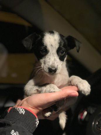 Отдаем щенка девочку,вырастет небольшой(до 10 кг)