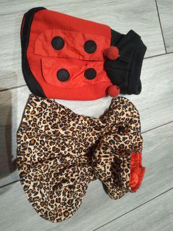 Ubranka dla pieska miniaturowego chihuahua