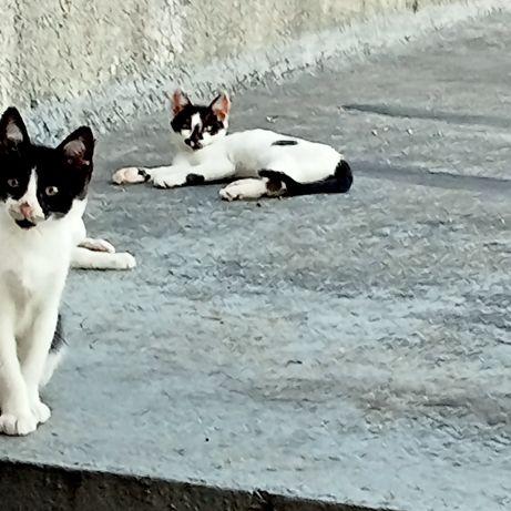 Dou gatos dois meses