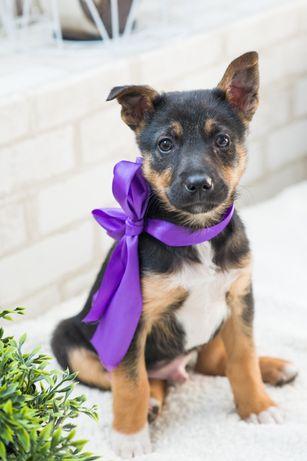 Маленький и хрупкий щенок