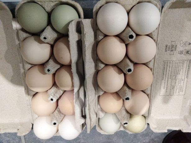 Jaja jajka zielone