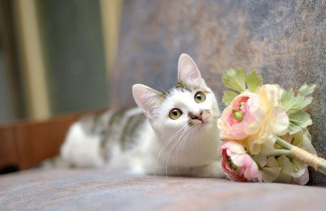 віддам кішку, стерилізована, ніжна,8 місяців