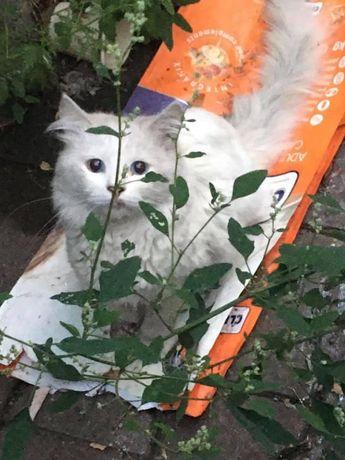Найден кот/кошка Одесса Центр