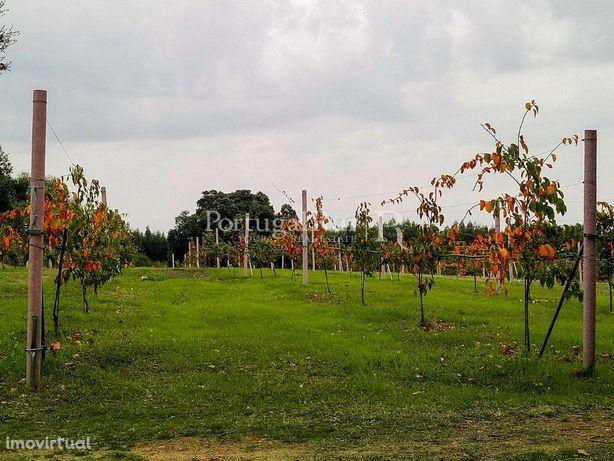 Quinta de produção biológica com cerca de 5 hectares