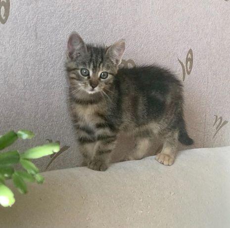 Котенок полосатая девочка