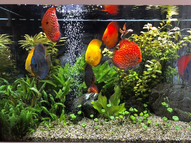 Установка,обслуживание,чистка аквариумов любой сложности)