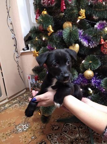 Срочно. Собачка Найкращі друзі дітей цуценята щенята цуцики щенок