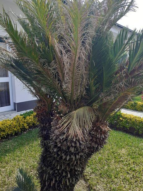 Sica de jardim com 175 de altura 4 cabeças