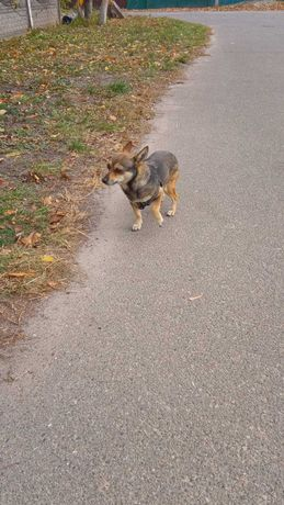 Потерялась собака(я не хозяин)