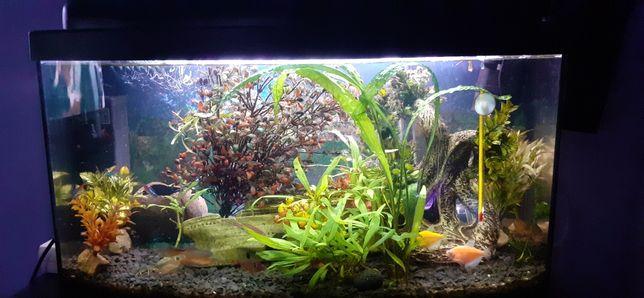 Akwarium panoramiczne 60l z oświetleniem, wyposażeniem i rybkami