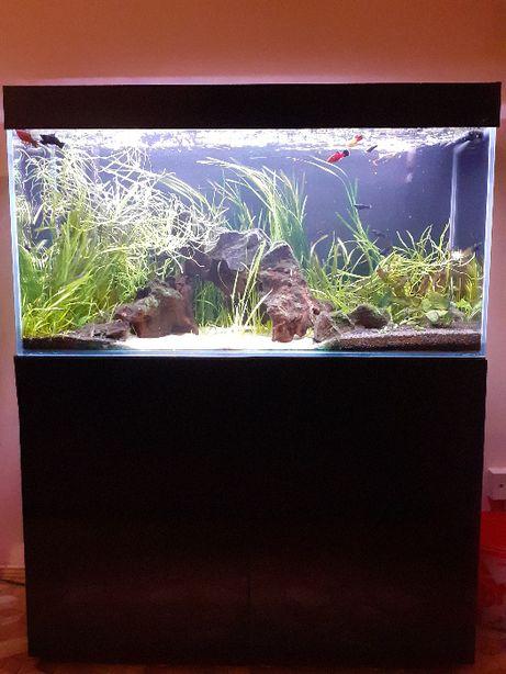 Akwarium optiwhite 200 L