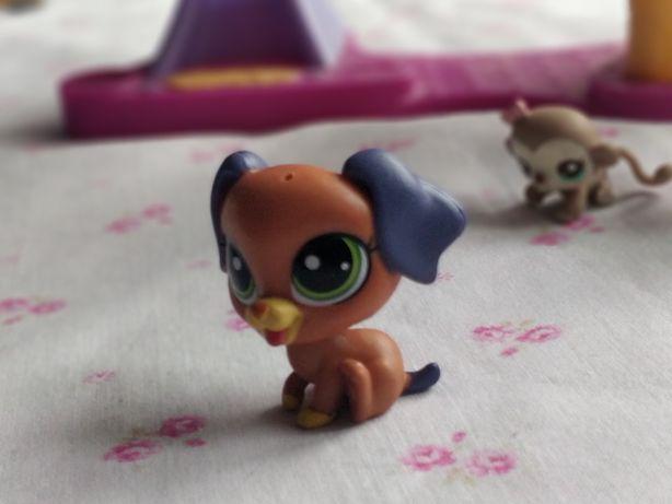 Littlest Pet Shop - LPS - Hasbro -  Brązowy piesek pies