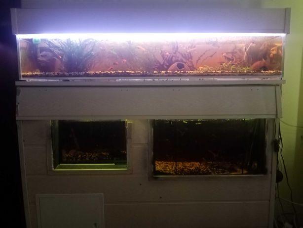 Akwarium z całym asortymentem