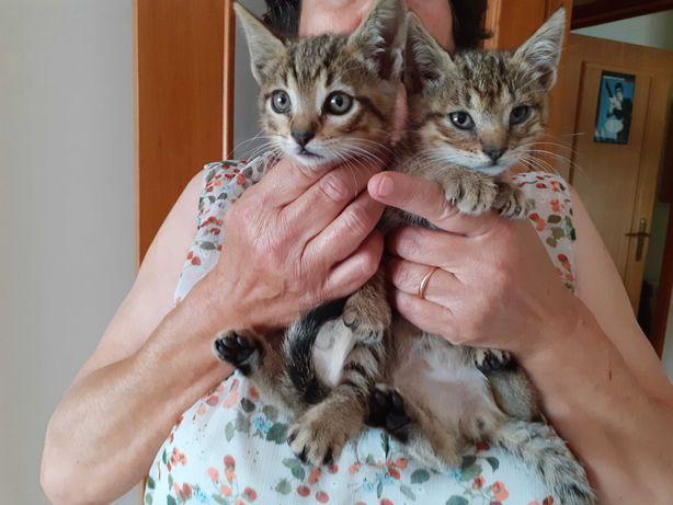 Gatinhos bebés  para doar