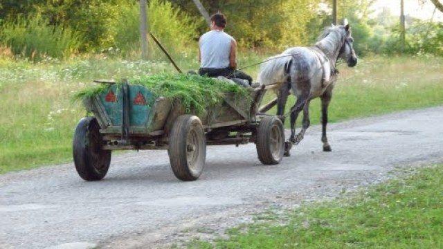 Продаю 2 вози кінні, лошадіна повозка.