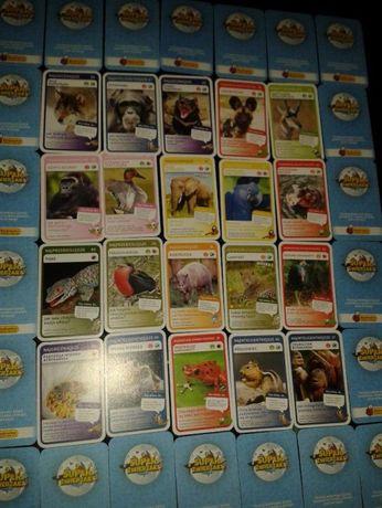 Karty super zwierzaki biedronka