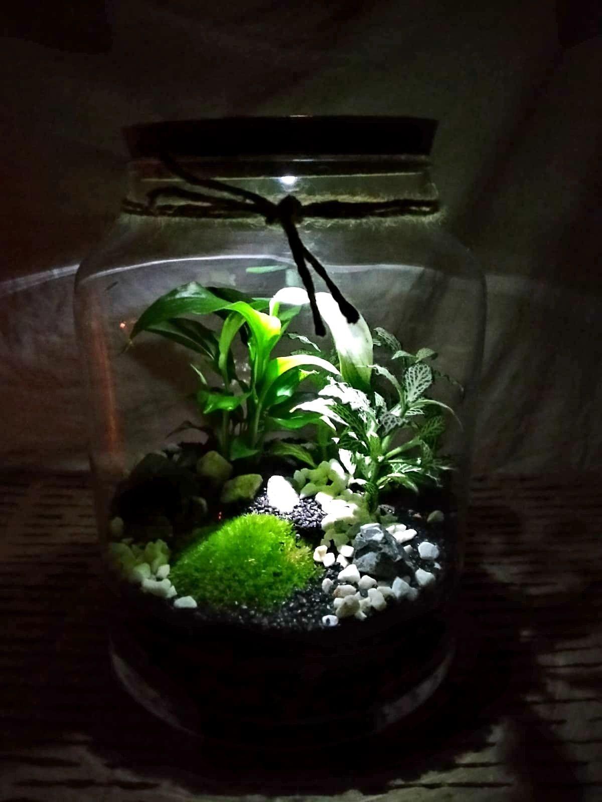 Las w słoiku z oświetleniem LED