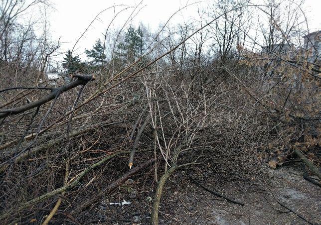 Wytne za darmo drzewa kszaki