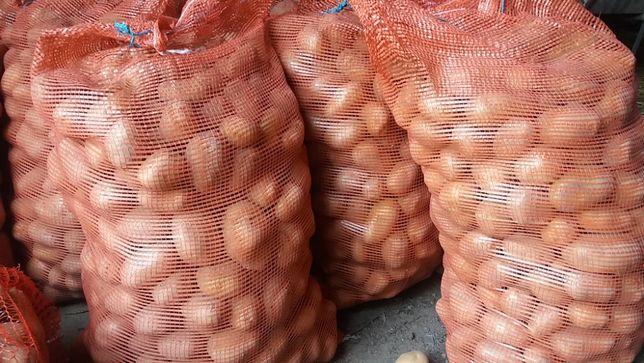 Ziemniaki jadalne Lord i Wineta.