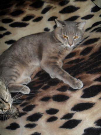 Помогите найти 2 домашних котиков