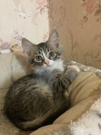 Кошечка,котенок 3 мес