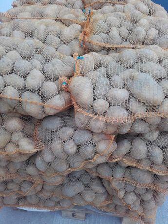 Sprzedam ziemniaki drobne wielkość sadzeniaka