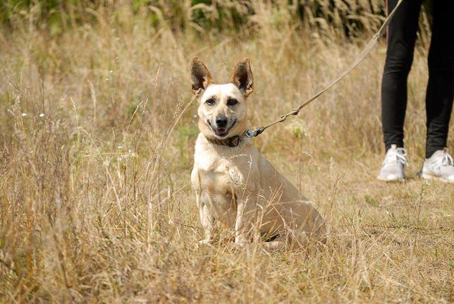Маленькая собачка, 2 года, 6,7 кг, привита, стерилизована. Собака.