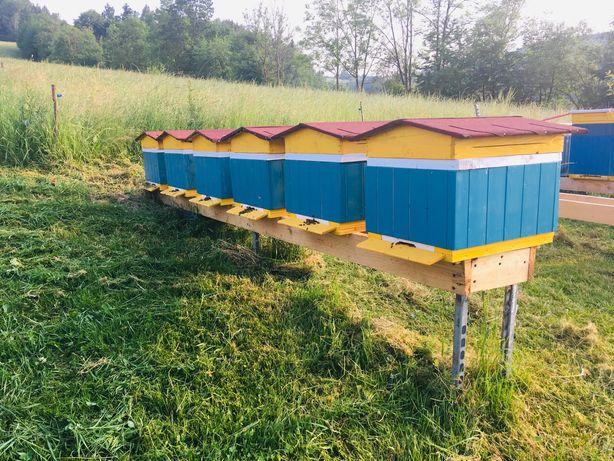Rodziny pszczele, pszczoły
