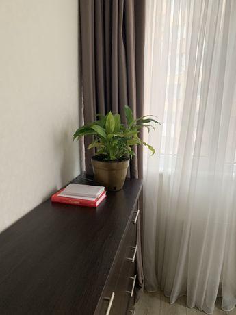 Спатифиллум ( женское счастье) /комнатное растение