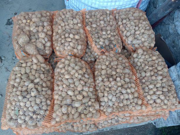Ziemniaki drobne, paszowe odpadowe