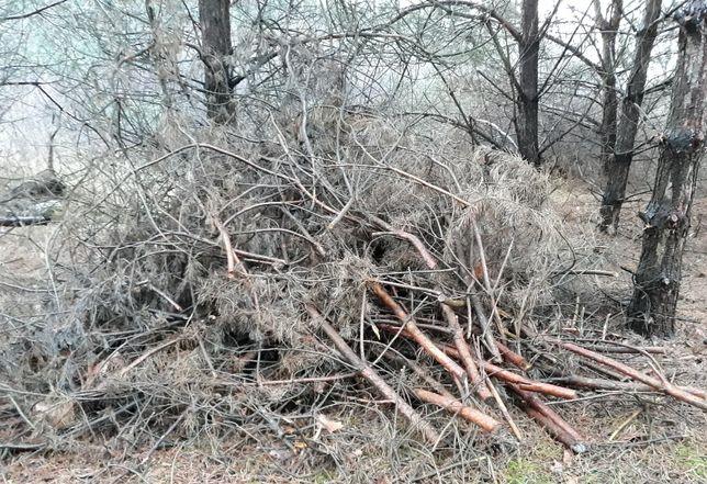 Drzewo opałowe gałęzie